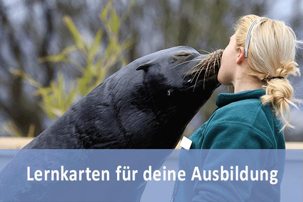 Lernkarten Tierpfleger für die Prüfungsvorbereitung