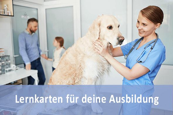 Lernkarten Tiermedizinischer Fachangestellter für die Prüfungsvorbereitung